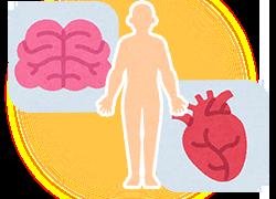 脳、心臓のイラスト